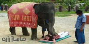 ماساژ فیل